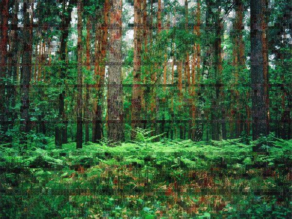 27_Forest_Border_Area_Near_Hohen_Neuendorf